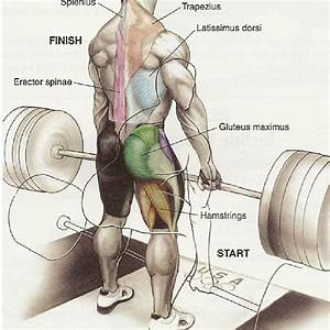 Deadlift Or Squat