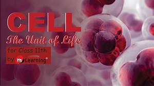 Cell The Unit Of Life  Cell Structure