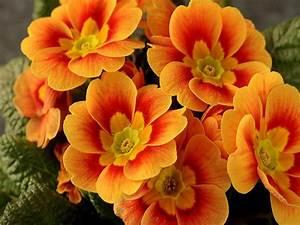 God's beautiful orange flowers - God-The creator Photo ...