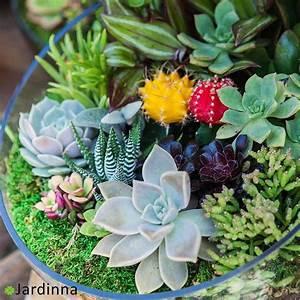 Plantes Grasses Intérieur : pots d coratifs pour plantes grasses d int rieur jardinna ~ Melissatoandfro.com Idées de Décoration