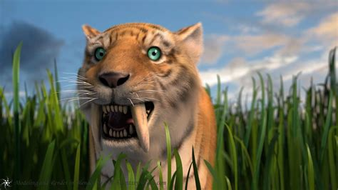 saber tooth tiger wallpapers wallpaper cave