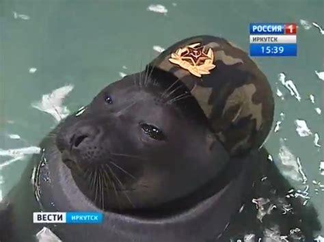pobeda patriotic seals twirl guns wear berets  mother