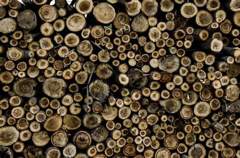 images wood texture number trunk pattern money