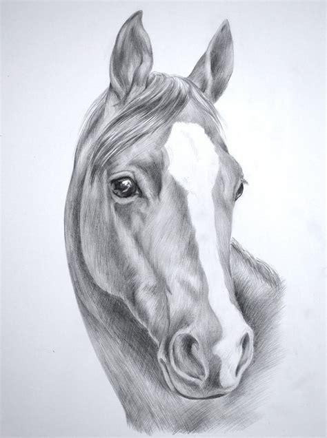 Horse Head Pencil Drawings