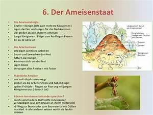 Ameisen Mit Flügel : tierstaaten shared using ~ Buech-reservation.com Haus und Dekorationen