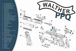 Walther Ppq Parts Diagram  Exploded  Homemade  1600 U00d71074