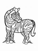 Zebra Coloring Pages Animals African Printable Mycoloring sketch template