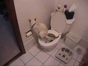 Cat using toilet toilet paper youtube for How to train dogs to go to the bathroom outside