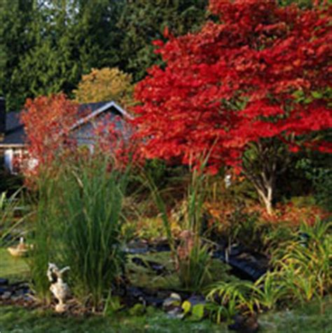 best fertilizer for japanese maple trees expertrees knowledge