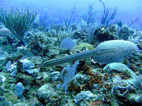 Las Galeras Divers: Scuba Diving in Dominican Republic ...