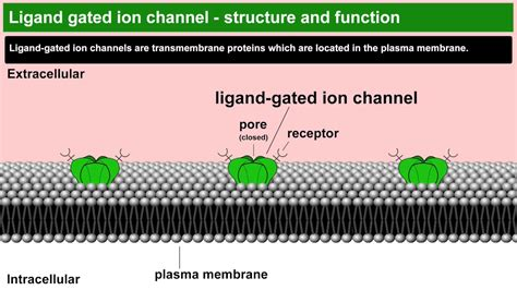 Ligand gated ion channels structure and function - YouTube