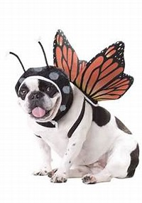 Image result for pet costumes