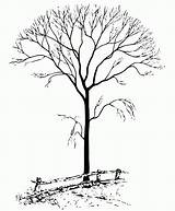 Tree Coloring Trees Bare Clipart Fall Leaves Nature Drawing Bing Colouring Leaf Without Seasons Fence Hell Snow Sheets Popular Burning sketch template