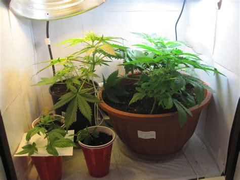 Closet Grow Rooms by Closet Grow Room Building 101