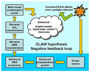 Claw Hypothesis
