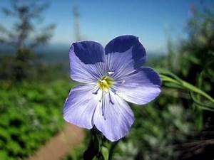 light blueish purple flowers.jpg Hi-Res 720p HD