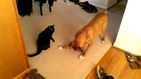 cat dogs bullies