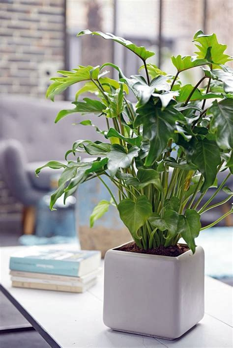 feng shui plants  harmony  positive energy   living room interior design ideas