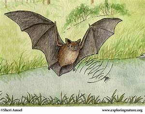 Bat  Little Brown