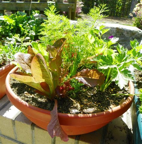 Plant A Salad Bowl Garden North Carolina Cooperative