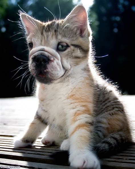cat  dog pictures freaking news