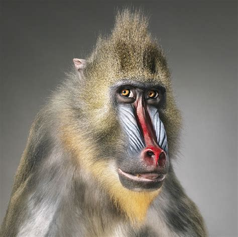 lindalemonjello tim flach extraordinary animals