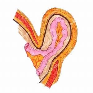 Венерических заболеваний влияющие на потенцию