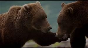 10 Screenshots From Disneynature U0026 39 S Bears Movie