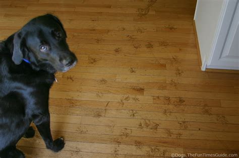 How To Protect Hardwood Floors From Dogs  The Flooring