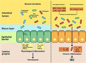 Interactions Between Microbiota And Host Genetic And