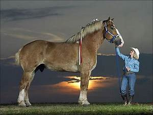 Mare Chart Laugh At The World Guinness World Record Tallest Horse