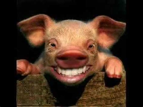 smiling pig youtube
