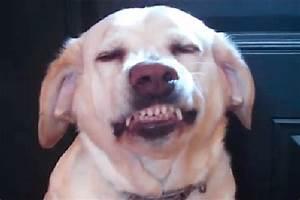 Dog Smiling Gif