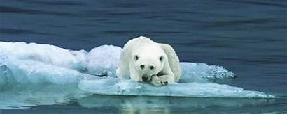 Polar Bear Gifs Animals 2021 Favim End