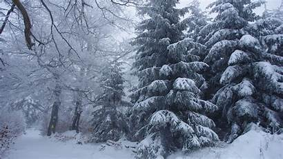 Forest Snow Winter Landscape Trees Snowy Night