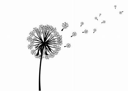 Dandelion Silhouette Clip Scattered Clipart Superawesomevectors Silhouettes