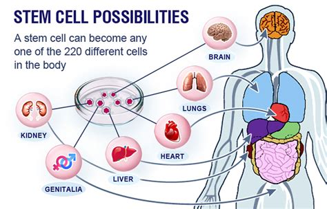 applications  stem cell therapy  guardian