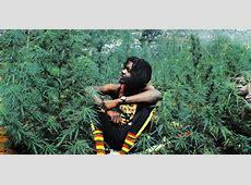 Jamaica Legalizes Medical Marijuana & Decriminalizes All