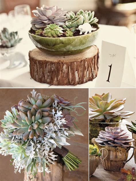 echeveria flowers weddings by lilly