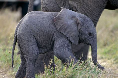 this baby elephant color quiz is savage af