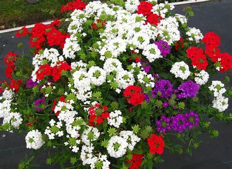 Viengadīgās puķes / Sortiments / anaZana