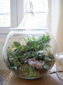 Acheter Terrarium Plante : un terrarium la touche d co pour les plantes dans la maison ~ Teatrodelosmanantiales.com Idées de Décoration