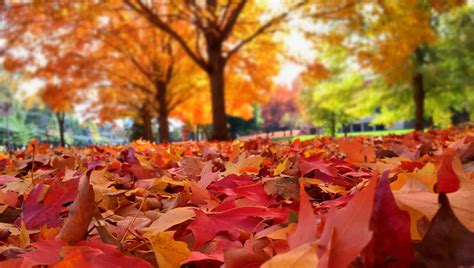 Your fallen leaves are wanted   Kingman Daily Miner ...