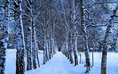 Path Winter Tree Lined Snow Wallpapers Background