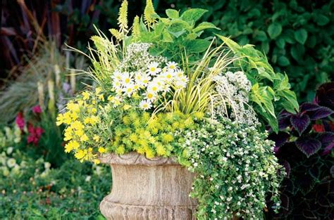 Container Ideas  Perennials In Pots  Gardening Birds