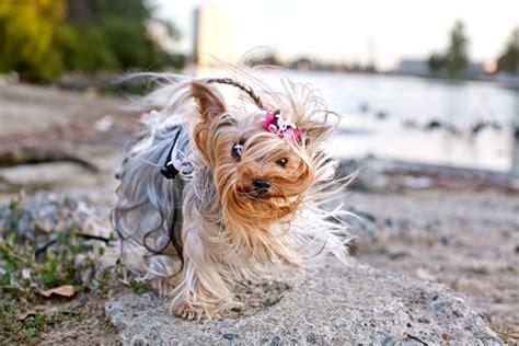 dog photoshoot bloopers  behance