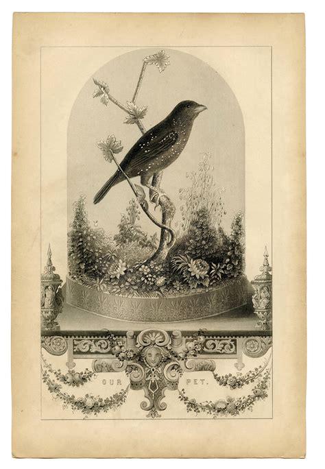 vintage printable breathtakingly beautiful bird