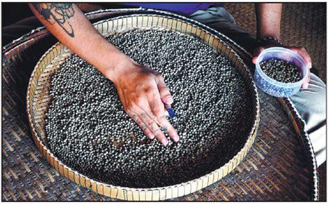 worker sorts  kampot pepper  cambodia lauded