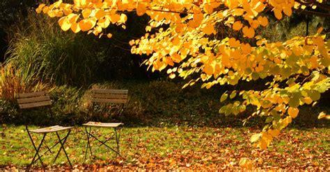 Herbst Blume Im Garten by De Tuin Bemesten In Het Najaar Het Klusje Dat Je Snel Vergeet