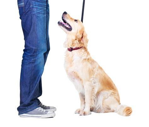Dog Obedience Classes & Dog Training Phoenix  Az Dog Sports